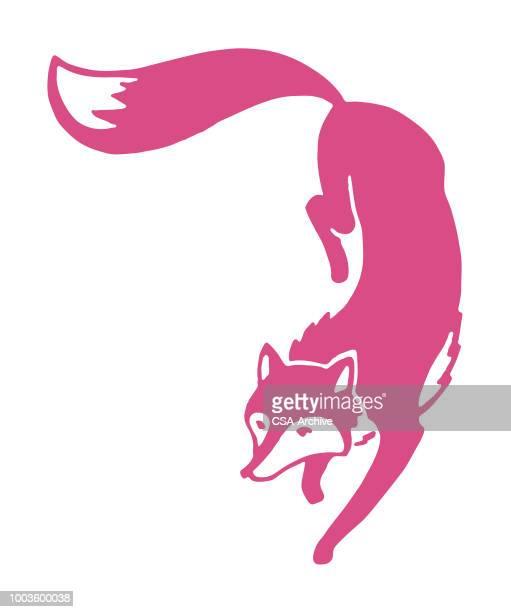 fox - tail stock illustrations