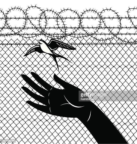 freedom sparrow prison release - releasing stock illustrations