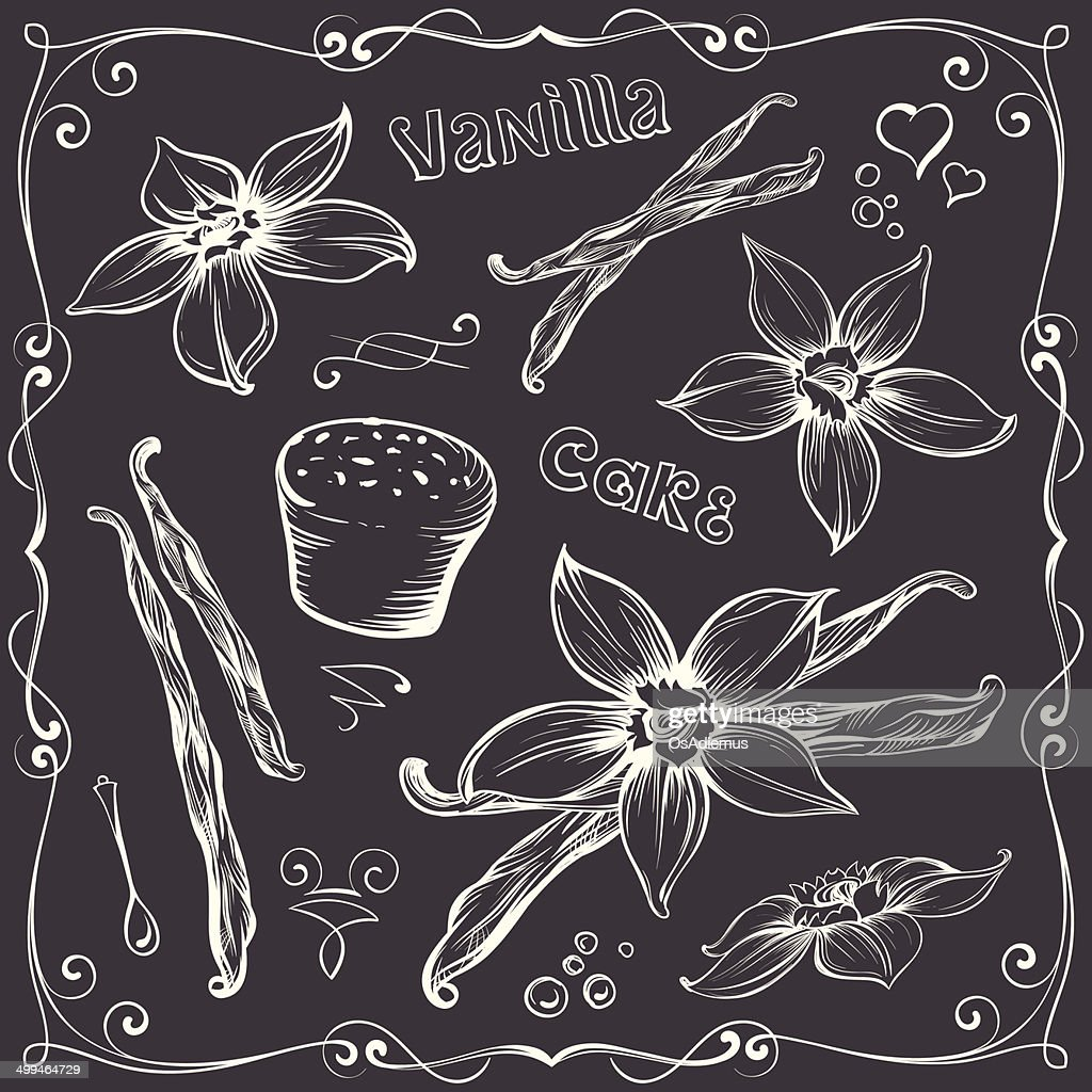 Freehand Contours of Vanilla Flowers and Bakery