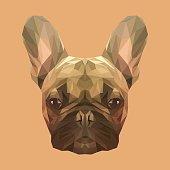 French bulldog animal low poly design.