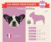 French Bulldog Dog breed vector infographics.