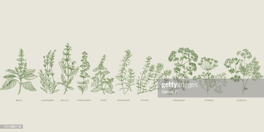 French cooking herbal sketch set
