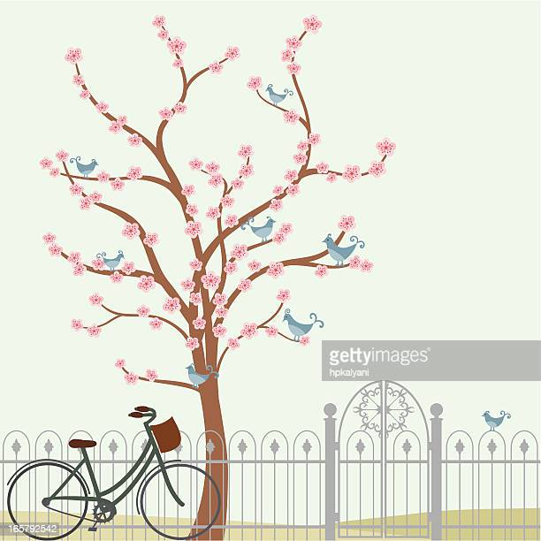 stockillustraties, clipart, cartoons en iconen met fresh air cherry tree and bicycle - bloesem