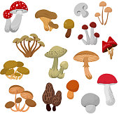 Fresh autumn mushrooms and toadstools cartoon vector set