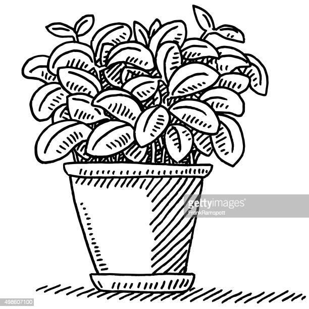 fresh basil pot plant drawing - basil stock illustrations, clip art, cartoons, & icons
