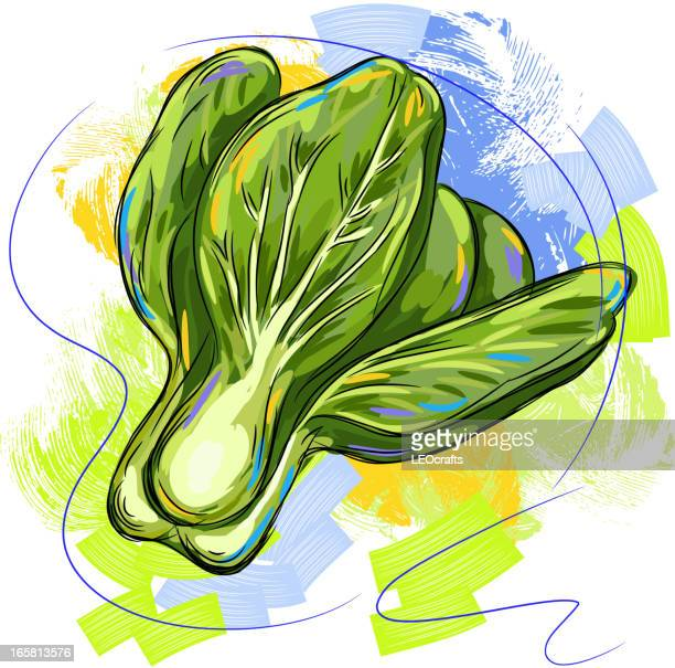 fresh chinese cabbage - chard stock illustrations, clip art, cartoons, & icons