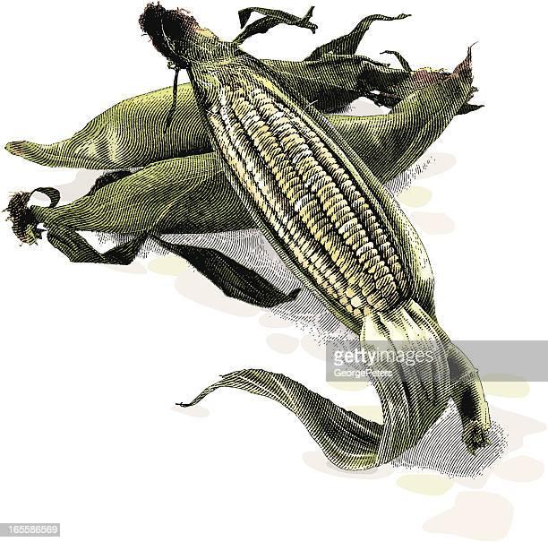 fresh corn - husk stock illustrations, clip art, cartoons, & icons