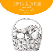 Fresh fruit in basket. Natural food for farmers market. Hand drawn vector illustration.