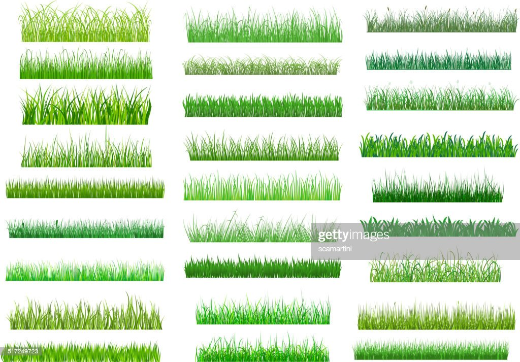 Fresh green spring grass borders