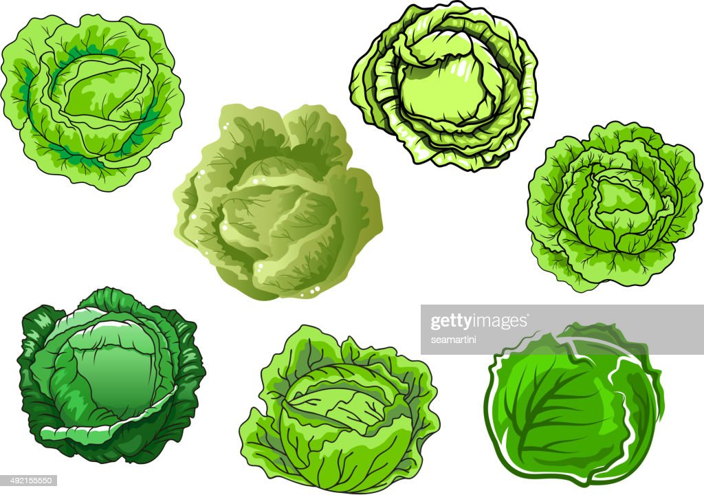 Fresh isolated green cabbage vegetables
