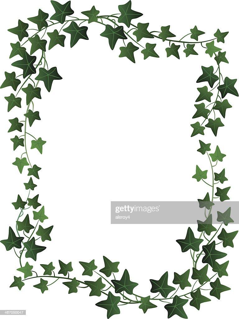 fresh ivy border vector art getty images