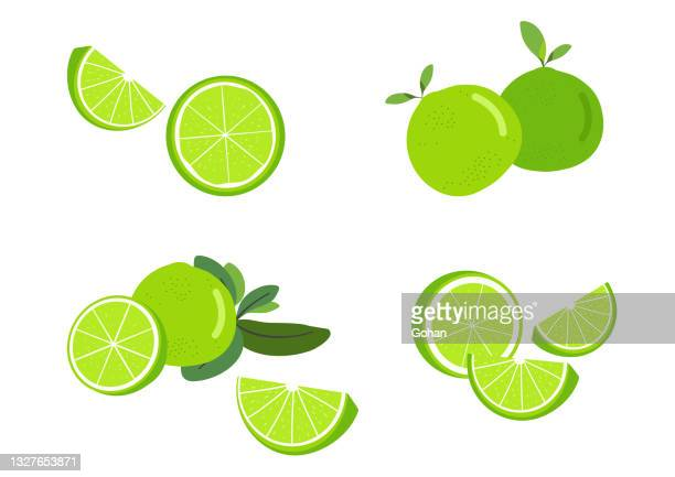 fresh lime herb vector isolated white