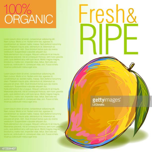 fresh mango - mango fruit stock illustrations, clip art, cartoons, & icons