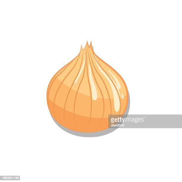 fresh onion on white background. - onion stock illustrations, clip art, cartoons, & icons