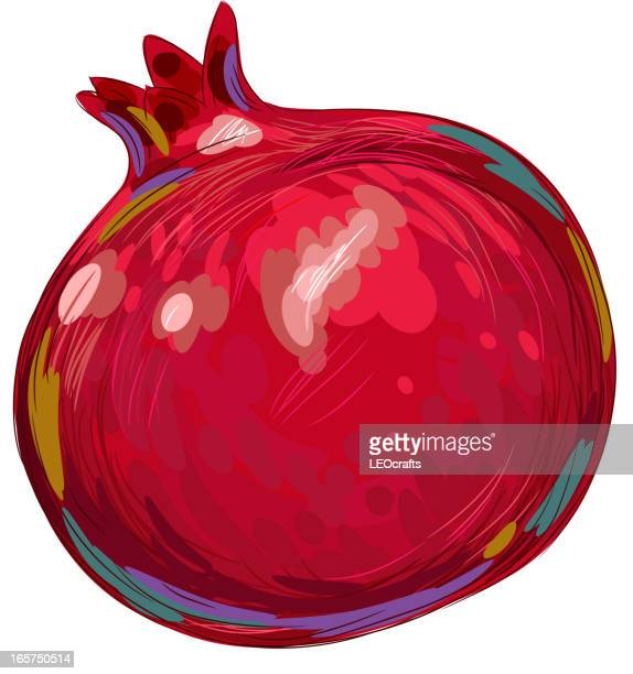 pomegranate vector art and graphics getty images