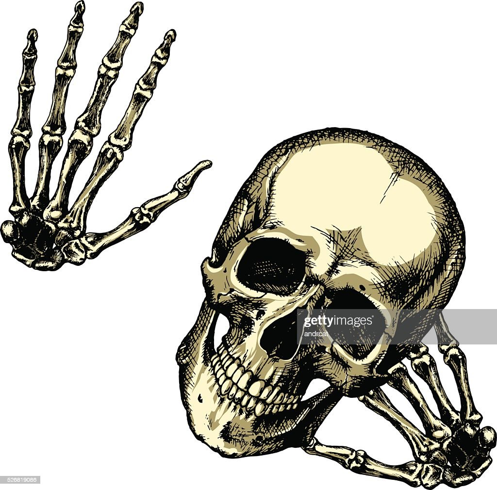 Friendly human skull with your hands on a blank background