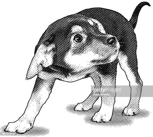 illustrazioni stock, clip art, cartoni animati e icone di tendenza di cagnolino spaventato - sfruttamento degli animali