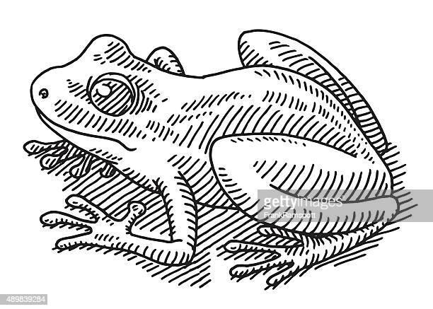 Frog Animal Drawing