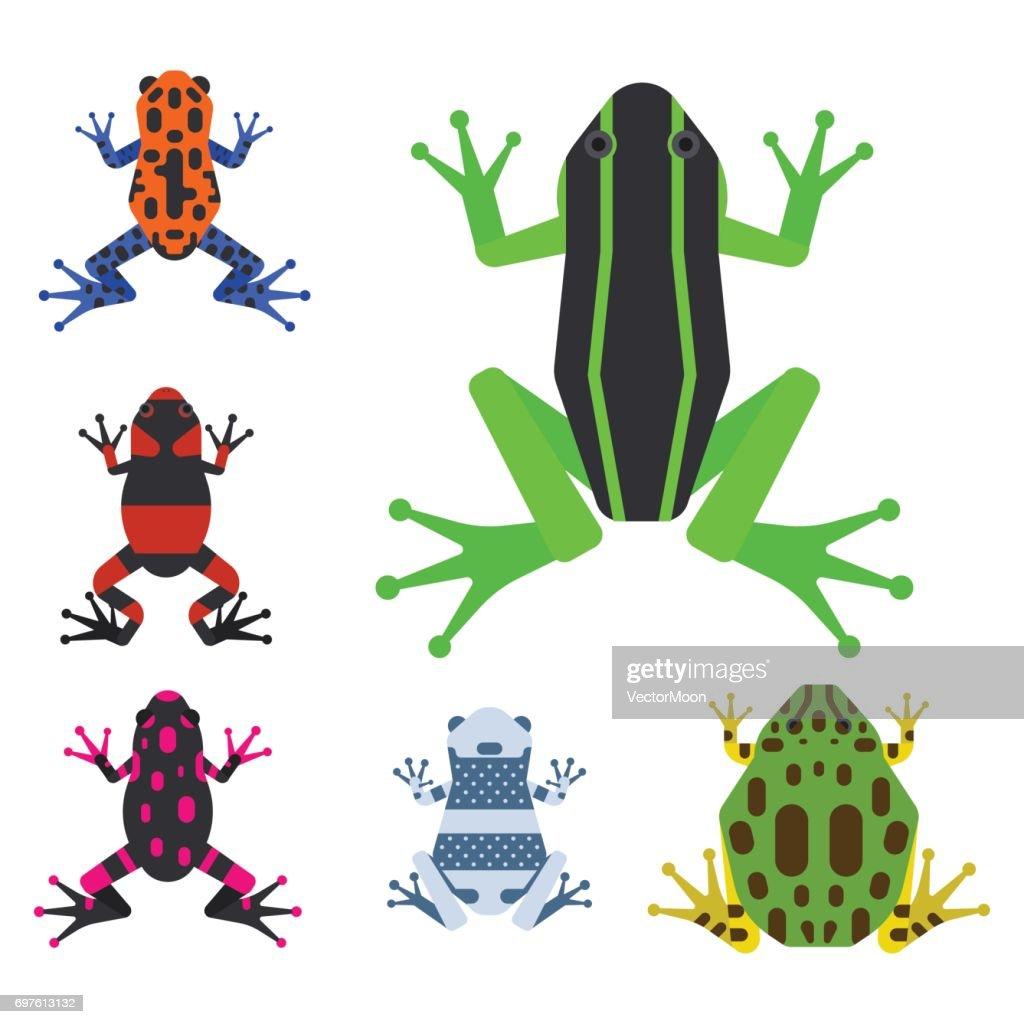 Frog cartoon tropical animal cartoon amphibian mascot character wild vector illustration