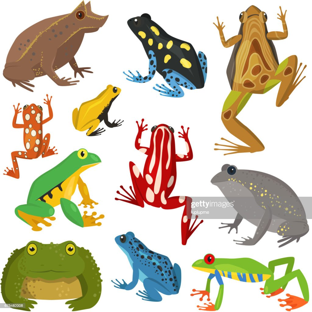 Frog cartoon tropical animal cartoon amphibian vector illustration