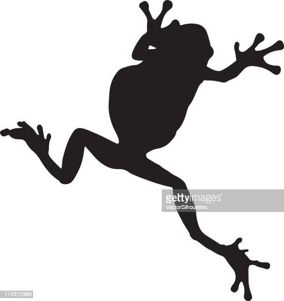 frog silhouette on white background - tree frog stock illustrations