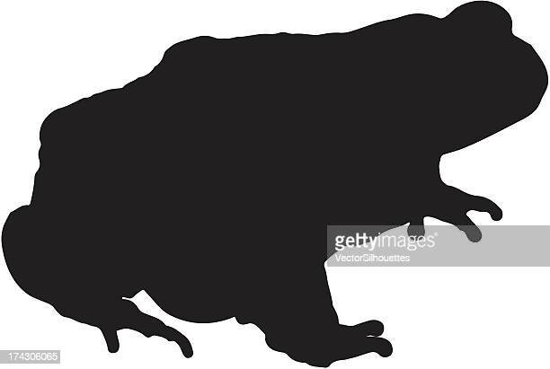 Frog Silhouette Vector Clipart Download   Animal silhouette, Silhouette  vector, Silhouette clip art