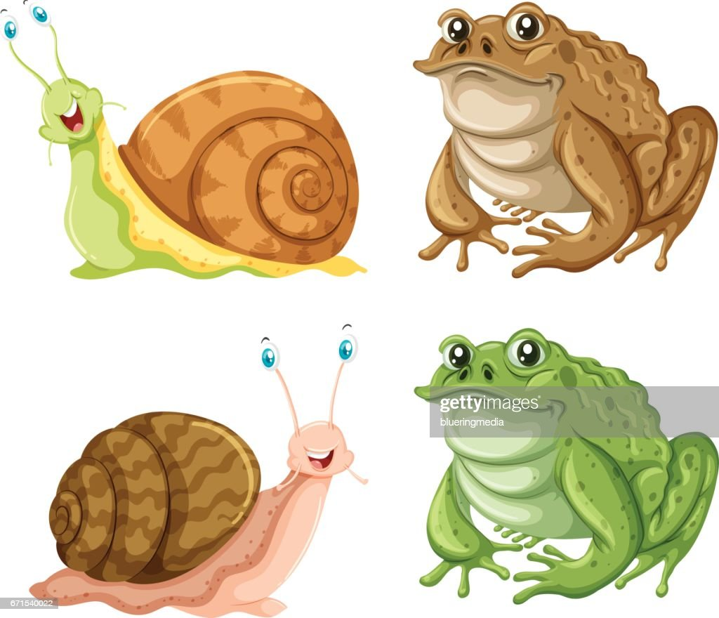 Frogs and snails on white background