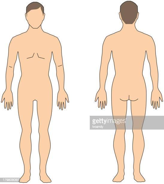 bildbanksillustrationer, clip art samt tecknat material och ikoner med front and back of human - naken