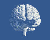 Frontal engraving brain illustration on blue BG