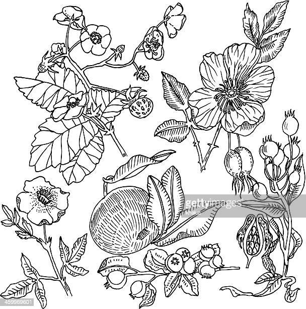 fruit background - rose hip stock illustrations