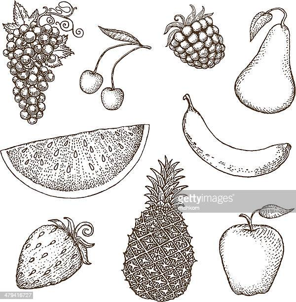 fruit drawings - apple fruit stock illustrations