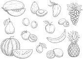 Fruit isolated sketch set for food, juice design