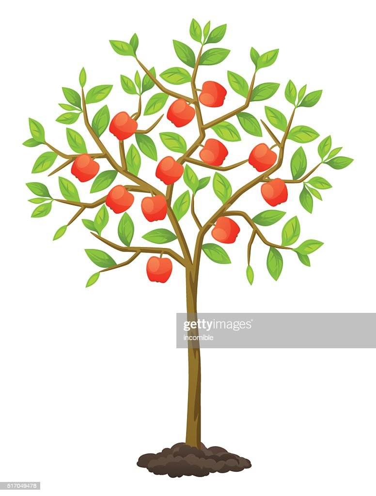 Fruit tree with apples. Illustration for agricultural booklets, flyers garden