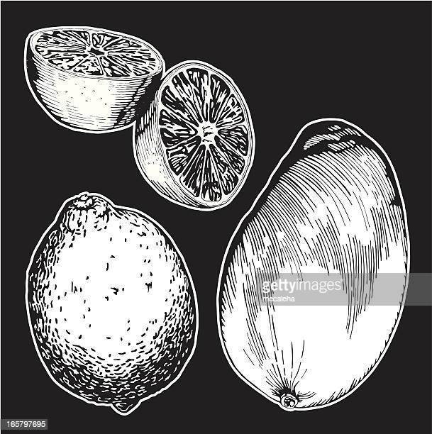 fruits, ink drawing - mango fruit stock illustrations, clip art, cartoons, & icons