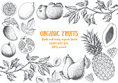 Fruits top view frame with papaya, pear, mango, pomegranate, lemon, peach, pineapple. Farmers market menu design. Healthy food poster. Vintage hand drawn sketch, vector illustration. Linear graphic.