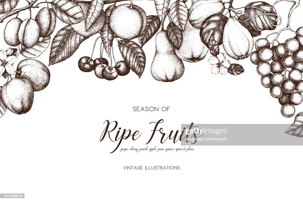 fruits tree card design