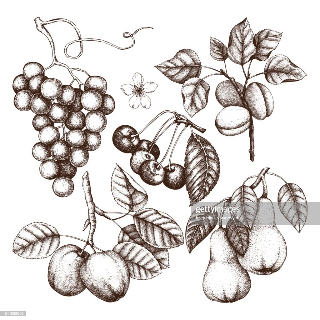fruits trees collection