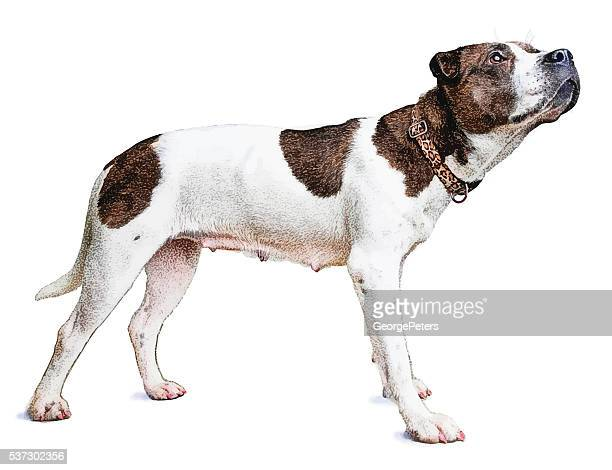 Full Length Color Portrait of Mixed Breed Female Dog