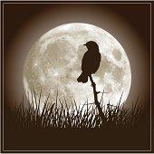 Full Moon and Nightingale Bird