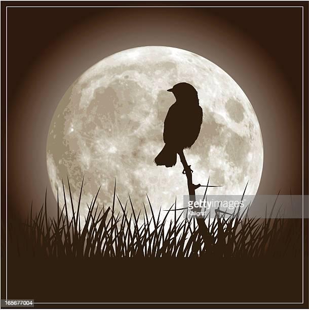 ilustraciones, imágenes clip art, dibujos animados e iconos de stock de luna llena y ruiseñor pájaro - luna llena