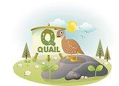 Funny Alphabet Q With Quail