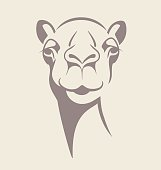 funny camel vector illustration for t- shirt, poster, print design