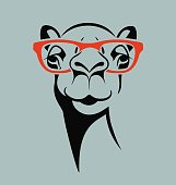 funny camel wearing glasses for t-shirt, poster, print design.