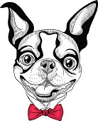 funny cartoon hipster Boston Terrier breed smiling