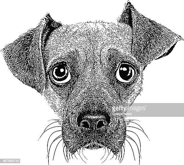 面白い犬の顔 - パグル犬点のイラスト素材/クリップアート素材/マンガ素材/アイコン素材