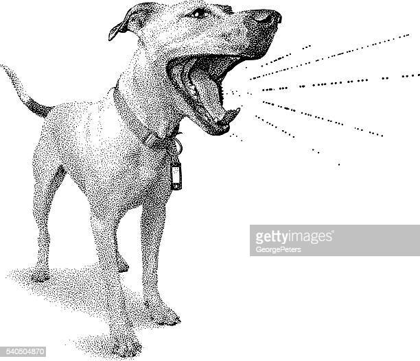 Funny dog shouting announcement