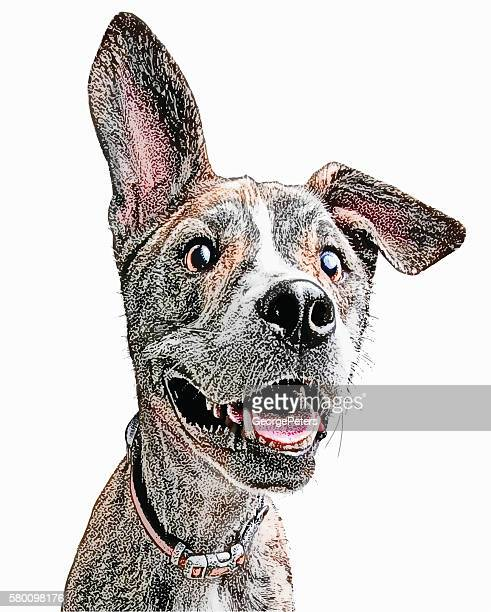 面白い、エネルギッシュな若いの犬、フロッピー耳