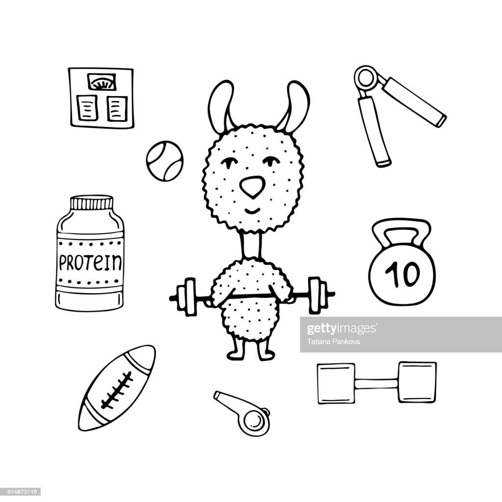 Funny lama the athlete with a bar and sports equipment.