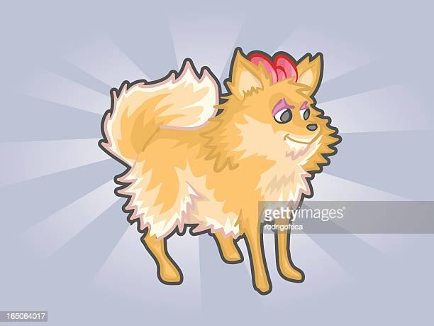 Funny Pomeranian or german spitz Dog