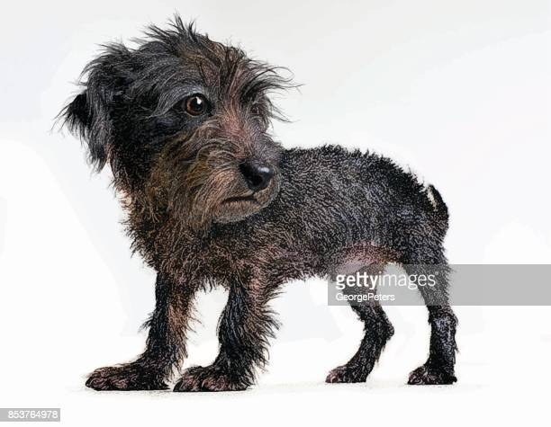 Funny Puppy waiting to be adopted. Terrier Dachshund mixed-breed dog.